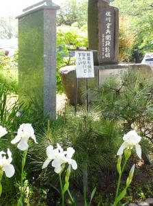 佐川官兵衛碑と阿蘇の松