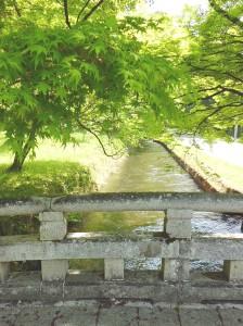 土田堰の水