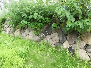 伏見奉行所跡地の石垣