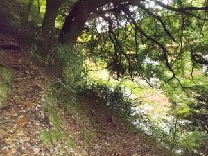 早川渓谷の山道