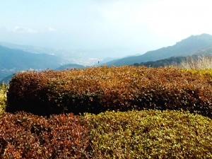 ケーブルカーを登り十国峠から見た真鶴半島