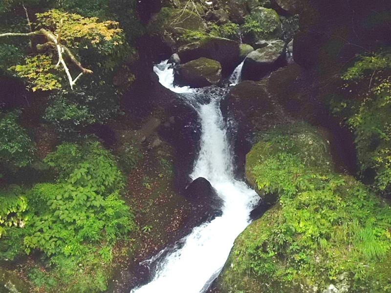 堂ヶ島渓谷の小瀧の白糸 早川の流れは湯本方へ落ちる。宿の湯煙に潜んでいたのは猫一匹。 Tweet