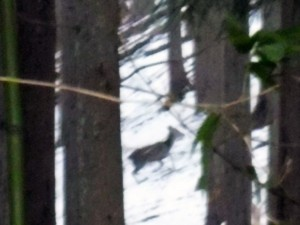 林小城の鹿