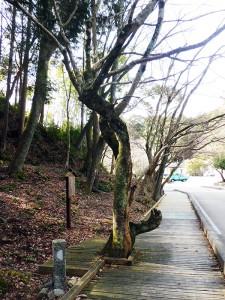 笠掛の楓と見初井戸跡