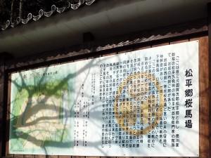 松平郷桜馬場