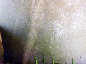 長楽寺の碑石の裏
