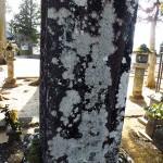 諏訪御料人の墓裏側