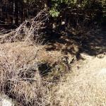 藤沢城の土塁遺構と東の石垣跡